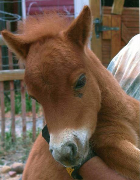 Ginger foal scan